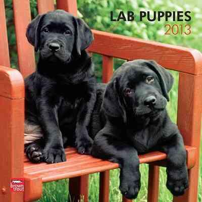Lab Puppies Calendar 2013