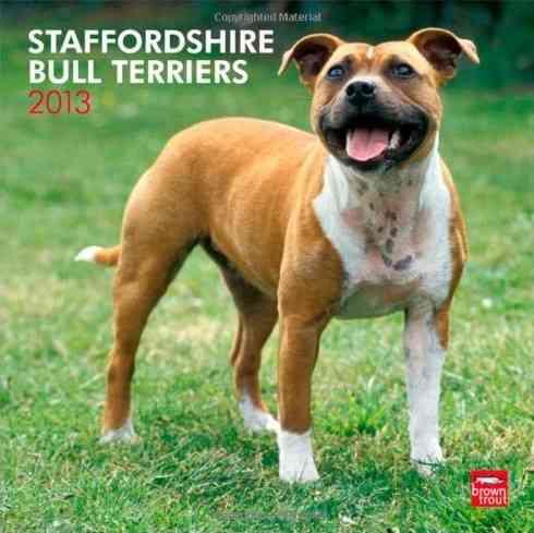 Staffordshire Bull Terriers 2013 Calendar (Calendar)