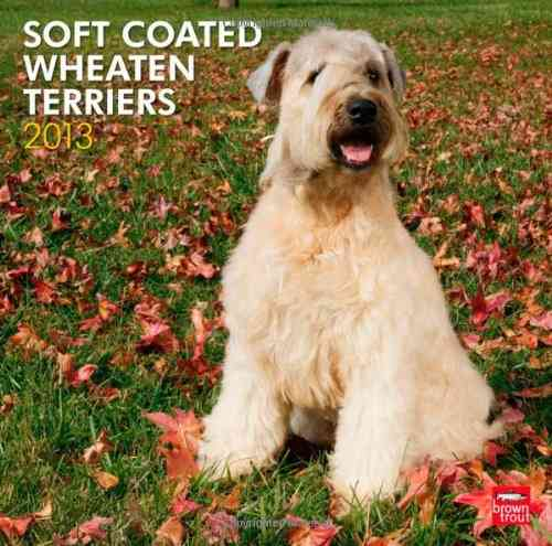 Soft Coated Wheaten Terriers 2013 Calendar (Calendar)