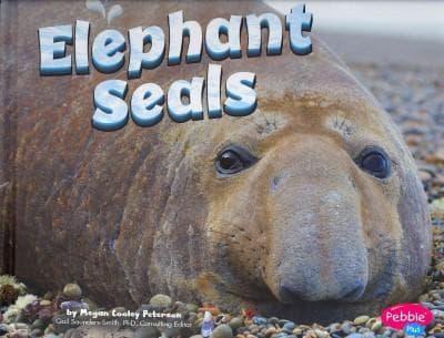 Elephant Seals (Hardcover)