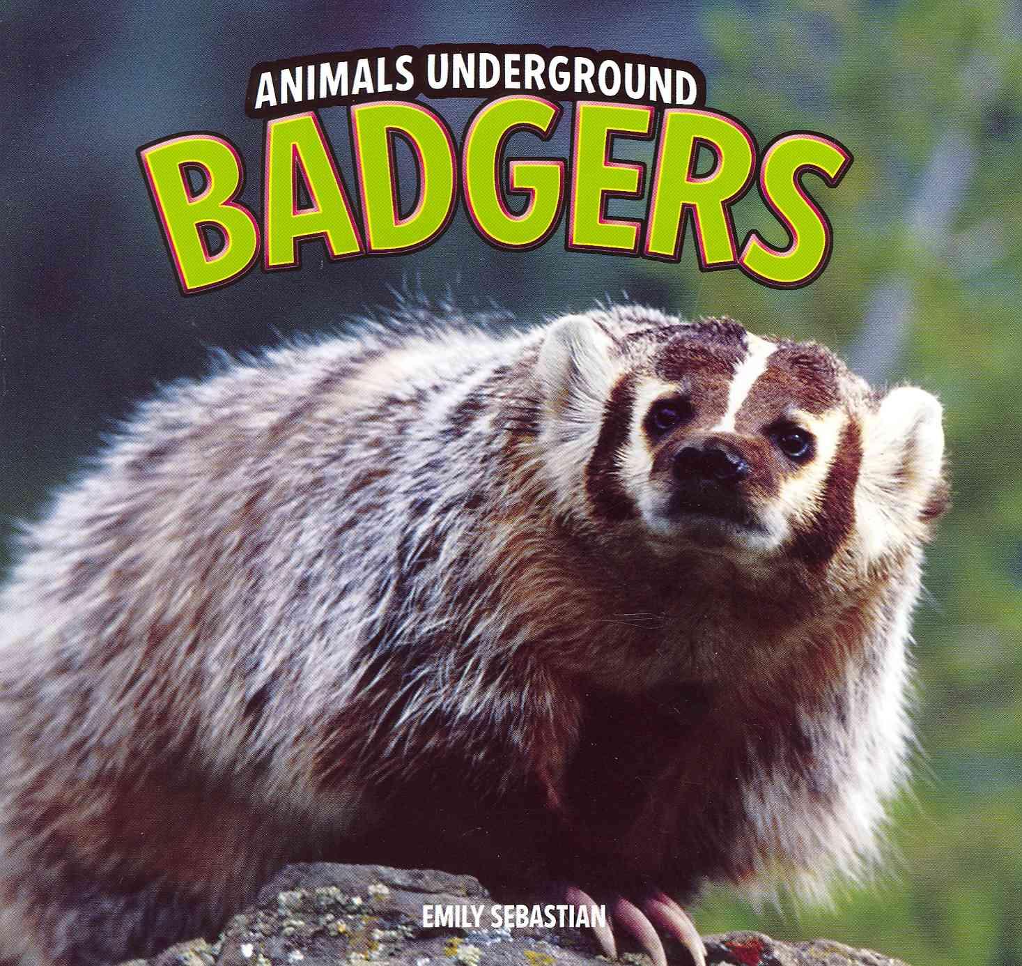 Badgers (Paperback)