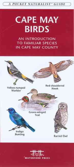 Cape May Birds: An Introduction to Familiar Species in Cape May County (Paperback)
