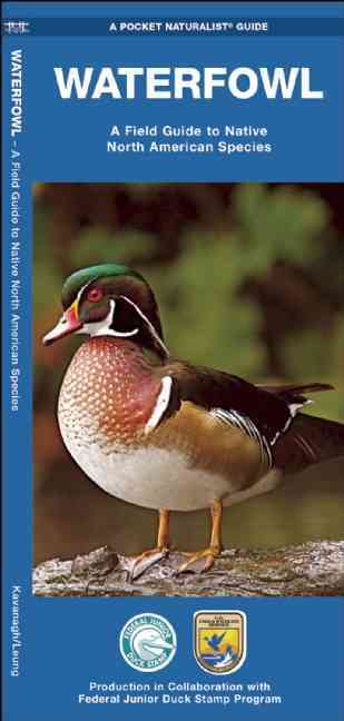 Waterfowl: A Field Guide to Native North American Species (Wallchart)