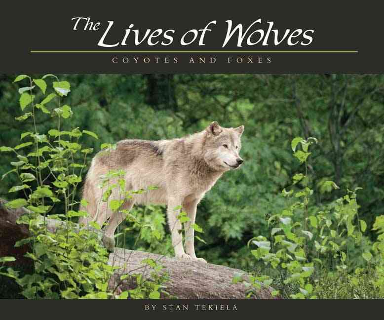 The Lives of Wolves, Coyotes and Foxes (Paperback)