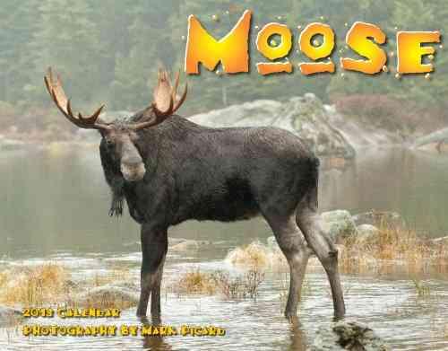Moose 2013 Calendar (Calendar)