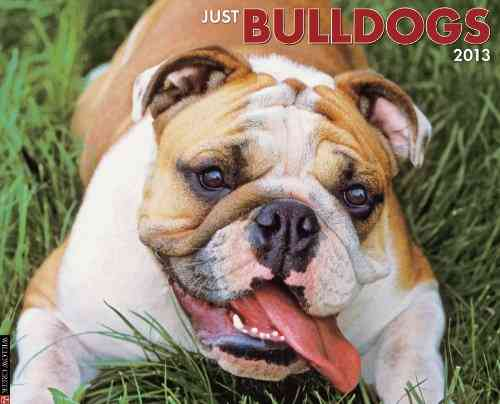 Just Bulldogs 2013 Calendar