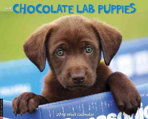 Chocolate Lab Puppies Calendar (Calendar)