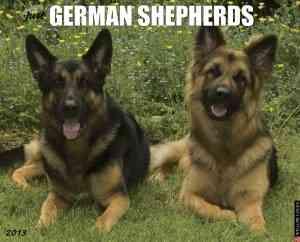 German Shepherds Calendar (Calendar)
