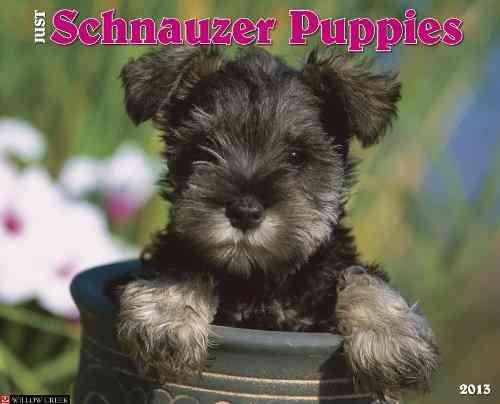 Just Schnauzer Puppies 2013 Calendar