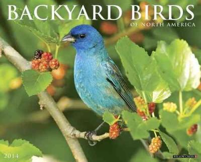 Backyard Birds of North America 2014 Calendar (Calendar)
