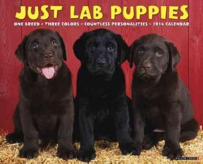 Just Lab Puppies 2014 Calendar (Calendar)