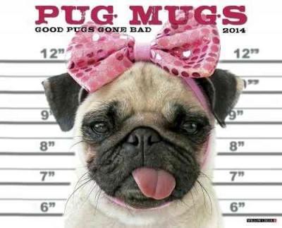 Pug Mugs 2014 Calendar (Calendar)