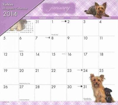 Yorkies Magnetic 2014 Calendar (Calendar)