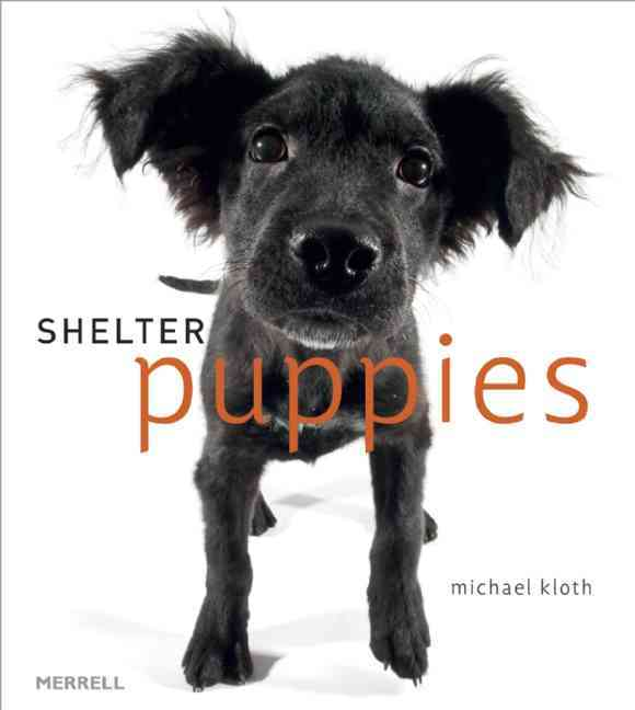 Shelter Puppies (Hardcover)