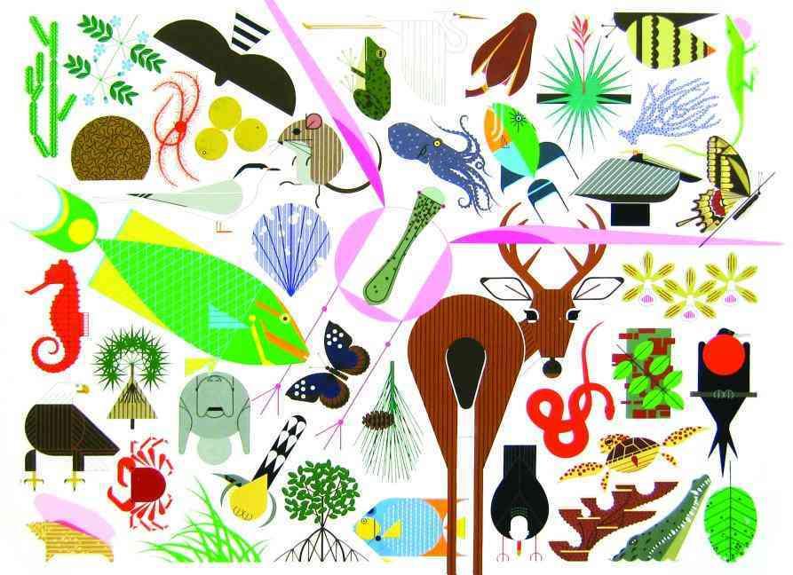 The Animal Kingdom (Hardcover)