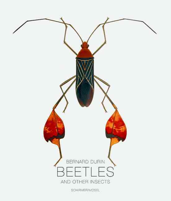 Beetles and Other Insects (Hardcover)