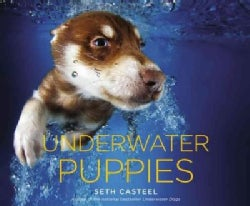 Underwater Puppies (Hardcover)