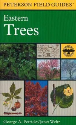 A Field Guide to Eastern Trees: Eastern United States and Canada, Including the Midwest (Paperback)