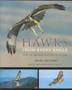 Hawks from Every Angle: How to Identify Raptors in Flight (Paperback)