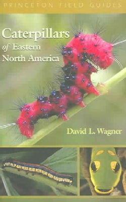 Caterpillars Of Eastern North America: A Guide To Identification And Natural History (Paperback)