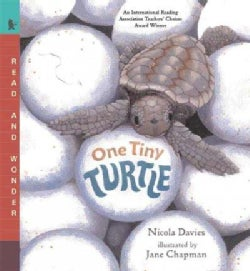 One Tiny Turtle (Paperback)