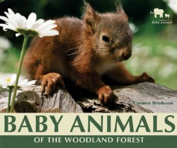 Baby Animals of the Woodland Forest (Hardcover)