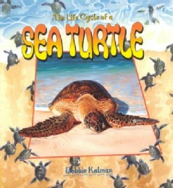 The Life Cycle of a Sea Turtle (Paperback)