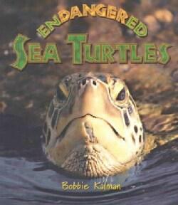 Endangered Sea Turtles (Paperback)