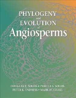 Phylogeny And Evolution Of Angiosperms