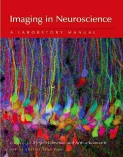 Imaging in Neuroscience (Paperback)