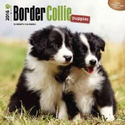Border Collie Puppies 2016 Calendar (Calendar)