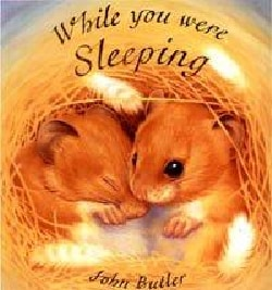 While You Were Sleeping (Board book)