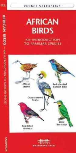 African Birds: A Folding Pocket Guide to Familiar Species (Paperback)