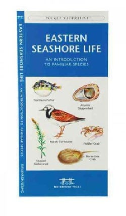 Eastern Seashore Life: A Folding Pocket Guide to Familiar Plants & Animals (Paperback)