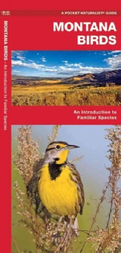 Montana Birds: A Folding Pocket Guide to Familiar Species (Paperback)