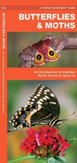 Butterflies & Moths: A Folding Pocket Guide to Familiar North American Species (Paperback)
