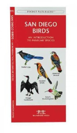 San Diego Birds: A Folding Pocket Guide to Familiar Species (Paperback)