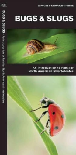 Bugs & Slugs: A Folding Pocket Guide to Familiar North American Invertebrates (Paperback)