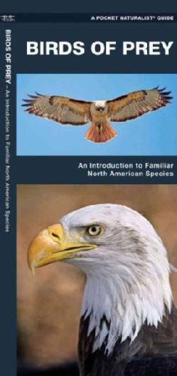 Birds of Prey: A Folding Pocket Guide to Familiar North American Species (Paperback)