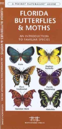 Florida Butterflies & Moths: An Introduction to Familiar Species (Paperback)