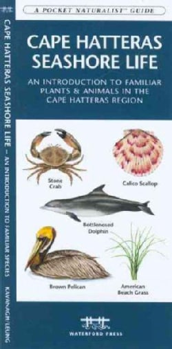 Cape Hatteras Seashore Life: An Introduction to Familiar Plants & Animals in the Cape Hatteras Region (Paperback)