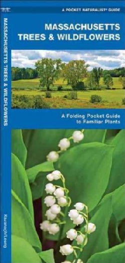 Massachusetts Trees & Wildflowers: An Introduction to Familiar Species (Paperback)