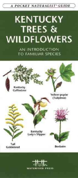 Kentucky Trees & Wildflowers: An Introduction to Familiar Species (Paperback)