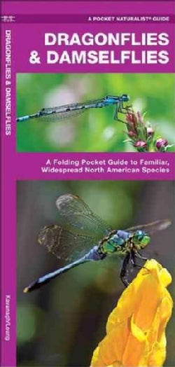 Dragonflies & Damselflies: An Introduction to Familiar, Widespread North American Species (Paperback)