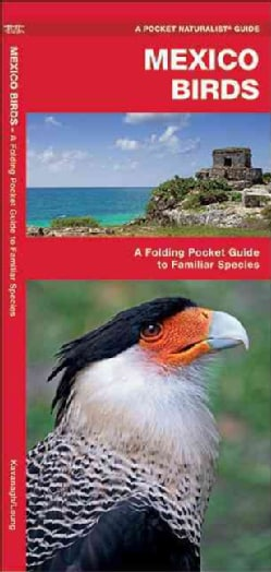 Mexico Birds: An Introduction to Familiar Species (Paperback)