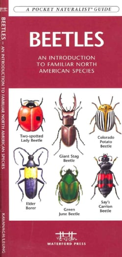 Beetles: An Introduction to Familiar North American Species (Cards)