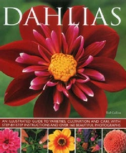 Dahlias: An Illustrated Guide to Varieties, Cultivation and Care, With Step-by-Step Instructions and Over 160 Bea... (Paperback)