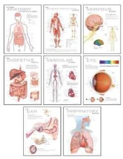 Human Anatomy Chart Pack (Wallchart)