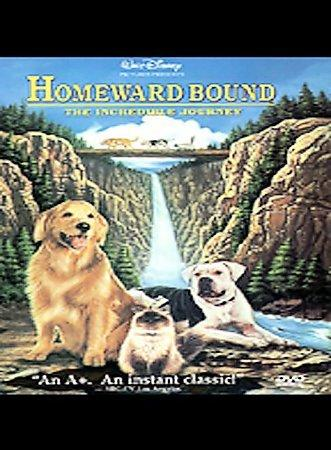 Homeward Bound (DVD) - Thumbnail 0