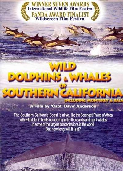 Wild Dolphins and Whales of Southern California